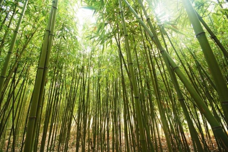 The Bamboo Tree